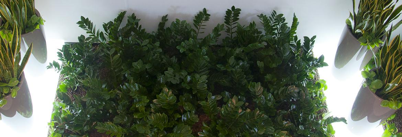 Zaprojektujemy zieleń w Twoim otoczeniu